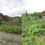 Jardiniers en «HERBE», faites-vous connaître !!!